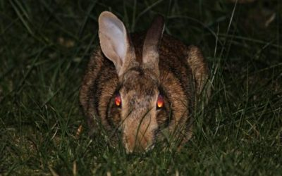 Bad Rabbit Cyber Attack Targeting Windows Machines